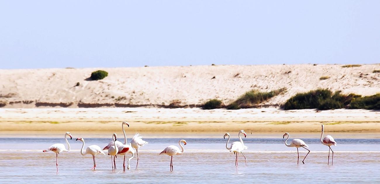 Ria Formosa Nature Park